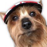 Hundkeps Summer Red   Solskydd till Små Hundar