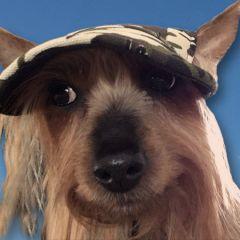 Hundkeps Camo Green | Hundkeps till Små Hundar