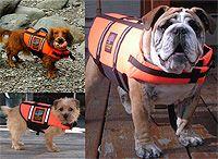 Flytvästar för hundar | Tryggt båtliv med hunden | DiivaDog.com